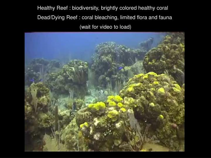 Healthy Reef : biodiversity, brightly colored healthy coral