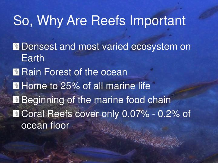 So, Why Are Reefs Important