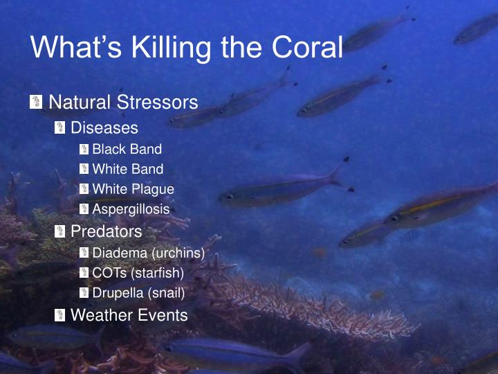 What's Killing the Coral