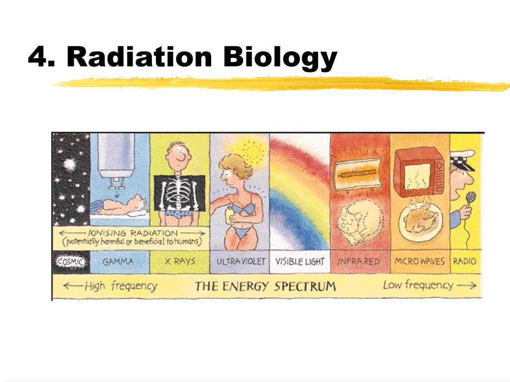 4. Radiation Biology