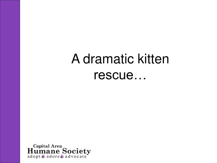 A dramatic kitten rescue