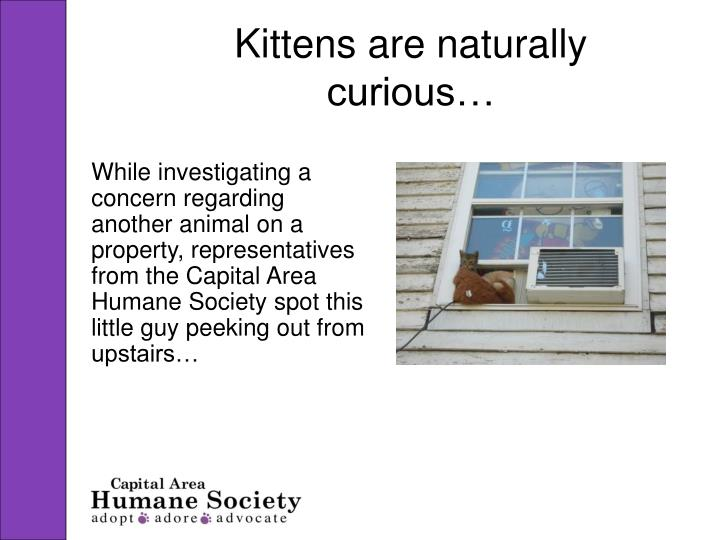 Kittens are naturally curious