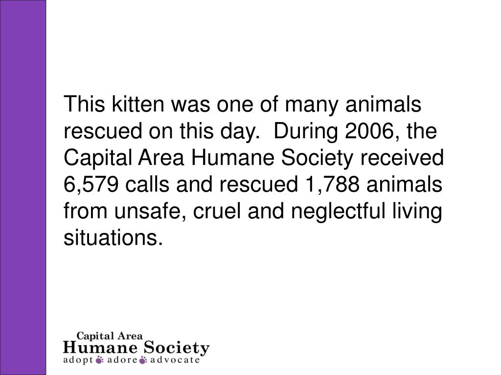 This kitten was one of many animals rescued on this day.  During 2006, the Capital Area Humane Society received 6,579 calls and rescued 1,788 animals from unsafe, cruel and neglectful living situations.