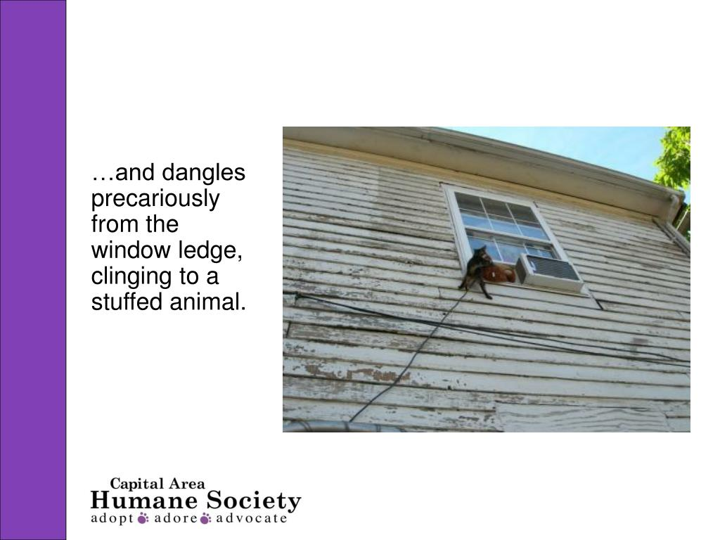 …and dangles precariously from the window ledge, clinging to a stuffed animal.