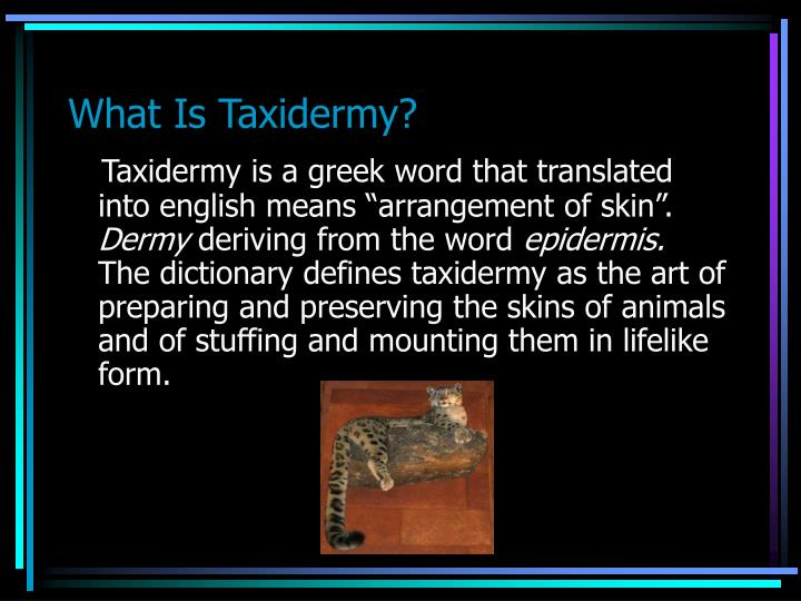 What is taxidermy