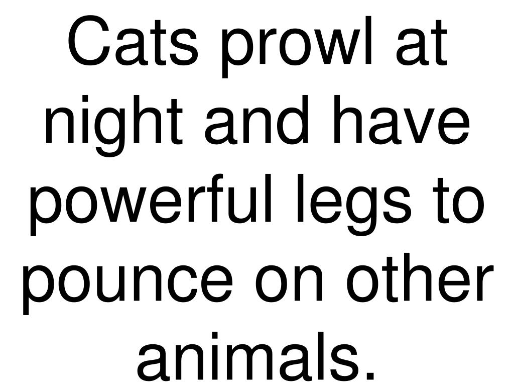 Cats prowl at night and have powerful legs to pounce on other animals.