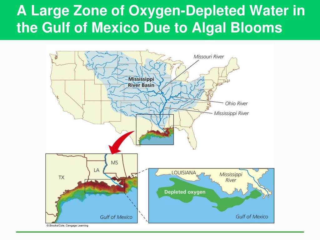 A Large Zone of Oxygen-Depleted Water in the Gulf of Mexico Due to Algal Blooms