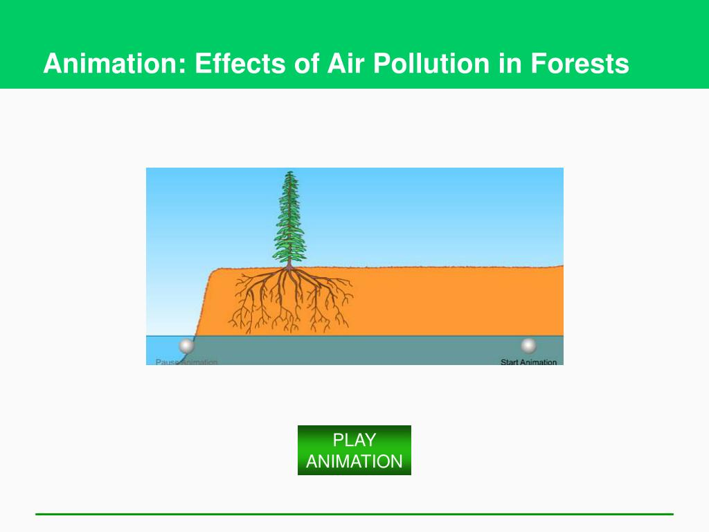 Animation: Effects of Air Pollution in Forests