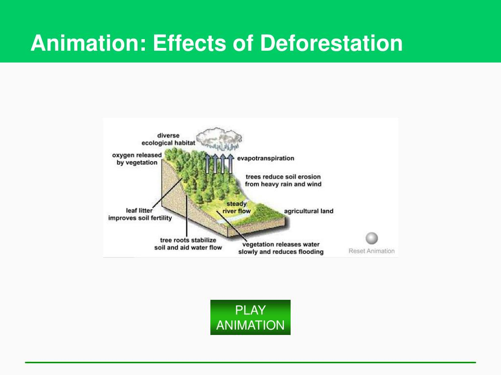 Animation: Effects of Deforestation