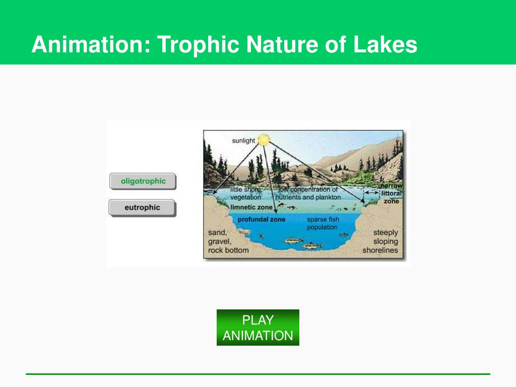 Animation: Trophic Nature of Lakes