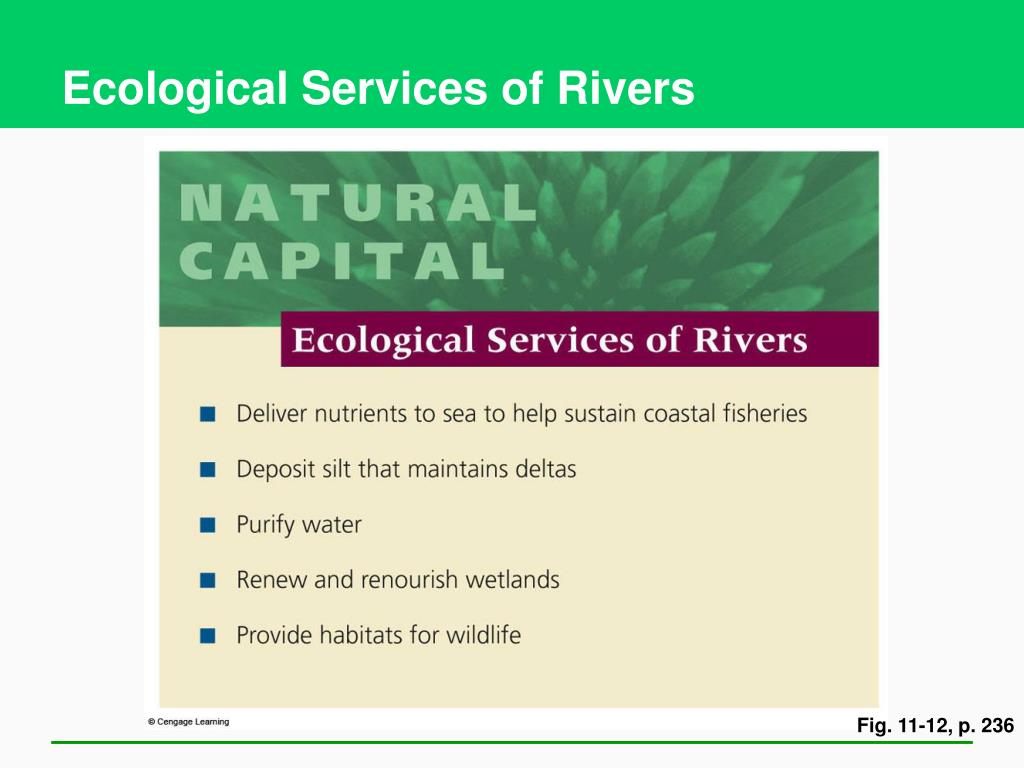 Ecological Services of Rivers