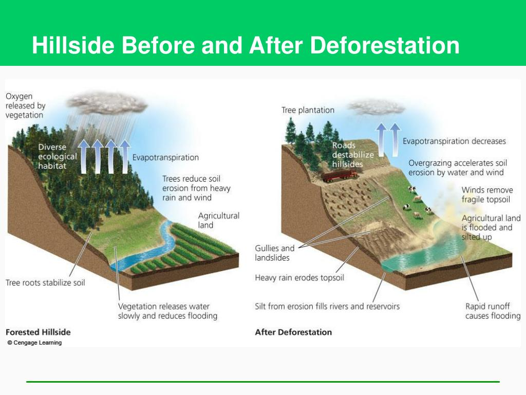 Hillside Before and After Deforestation