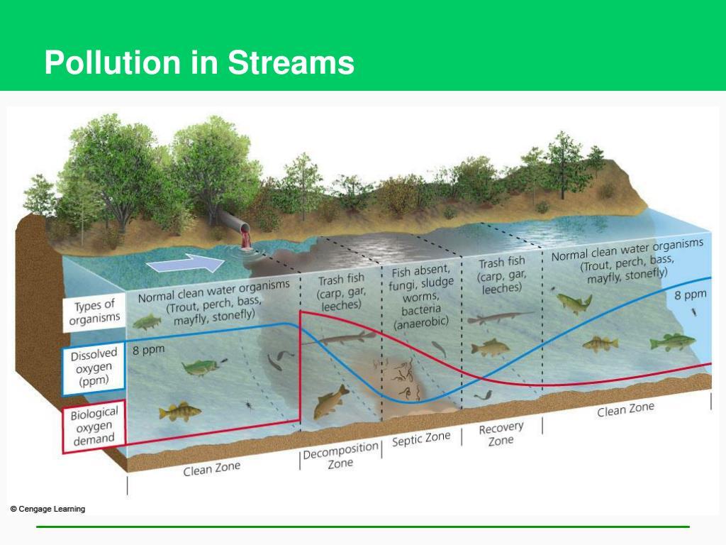 Pollution in Streams