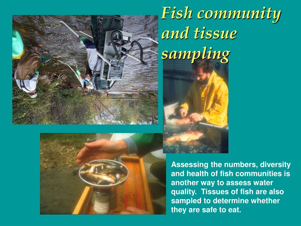 Fish community and tissue sampling
