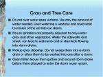 grass and tree care