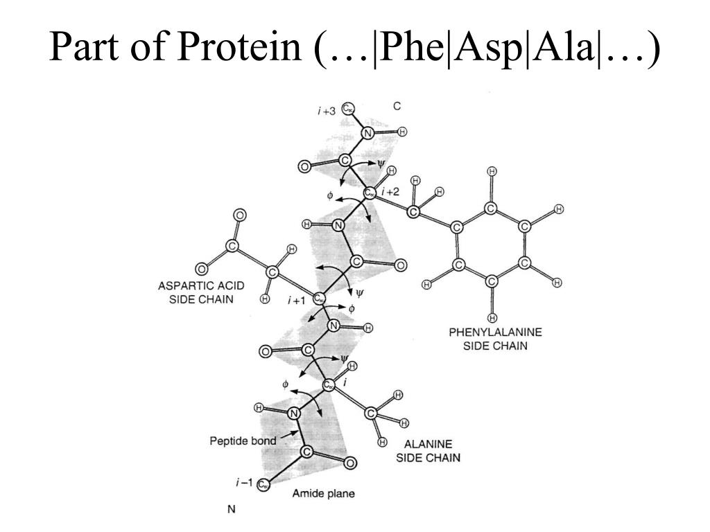 Part of Protein (…|Phe|Asp|Ala|…)