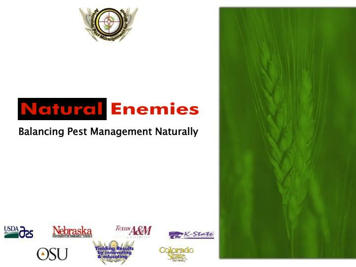 Balancing Pest Management Naturally