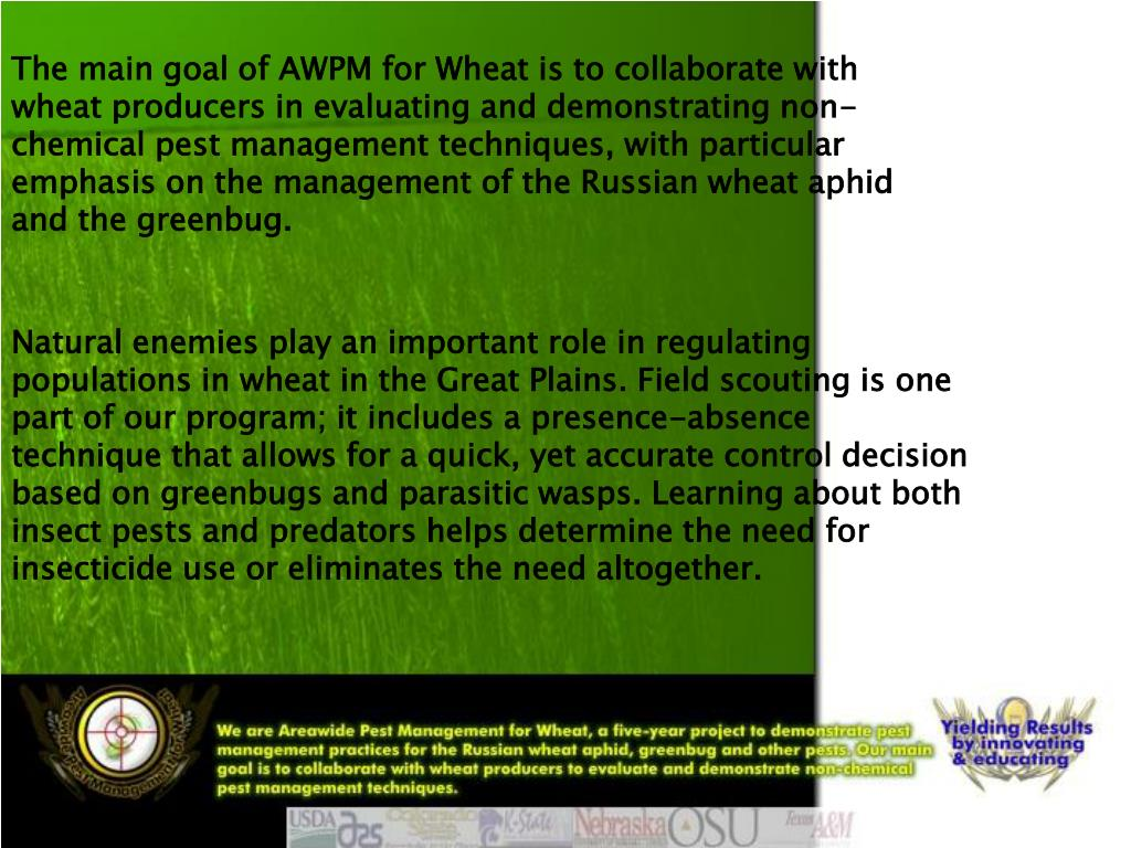 The main goal of AWPM for Wheat is to collaborate with wheat producers in evaluating and demonstrating non-chemical pest management techniques, with particular emphasis on the management of the Russian wheat aphid and the greenbug.