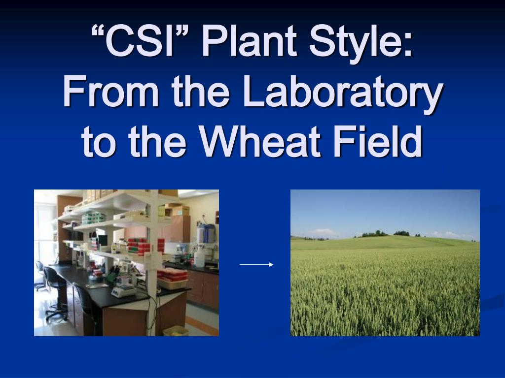 """CSI"" Plant Style: From the Laboratory to the Wheat Field"