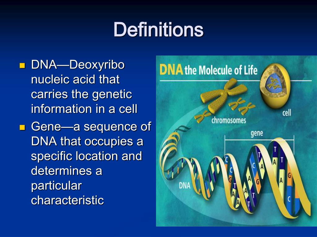 DNA—Deoxyribo nucleic acid that carries the genetic information in a cell