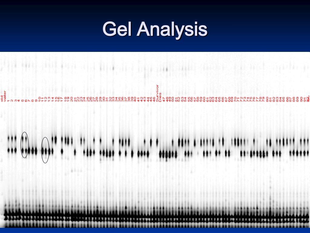 Gel Analysis