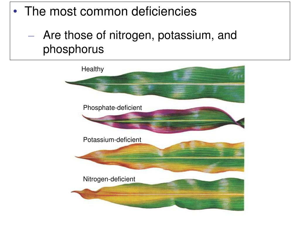 The most common deficiencies