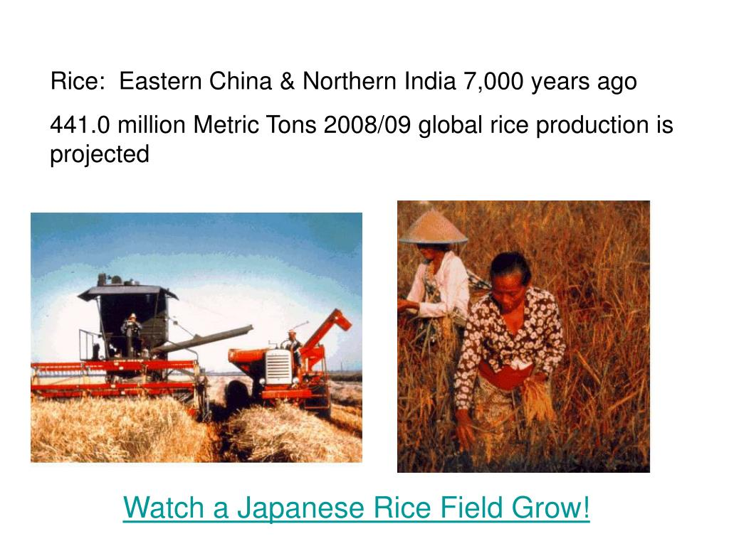Rice:  Eastern China & Northern India 7,000 years ago