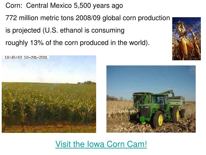 Corn:  Central Mexico 5,500 years ago