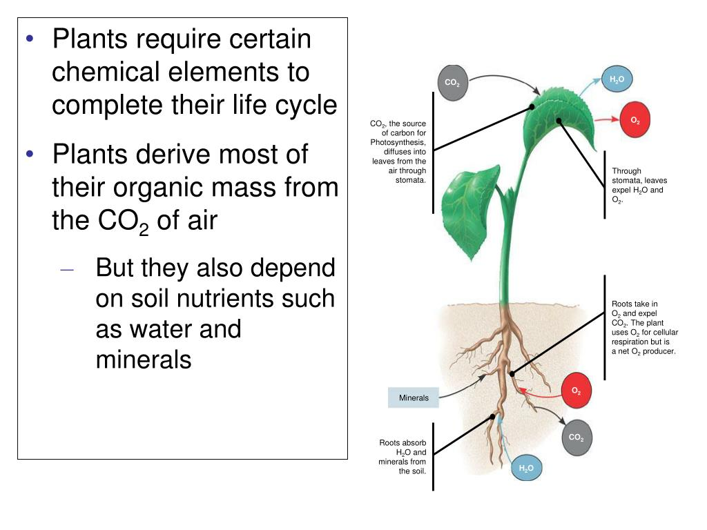 Plants require certain chemical elements to complete their life cycle