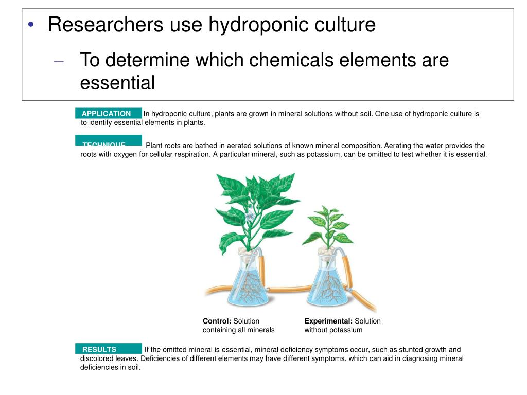 Researchers use hydroponic culture