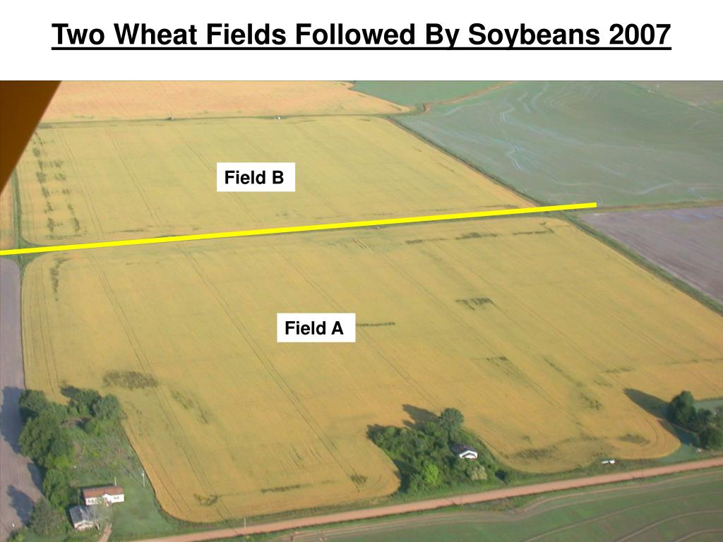 Two Wheat Fields Followed By Soybeans 2007
