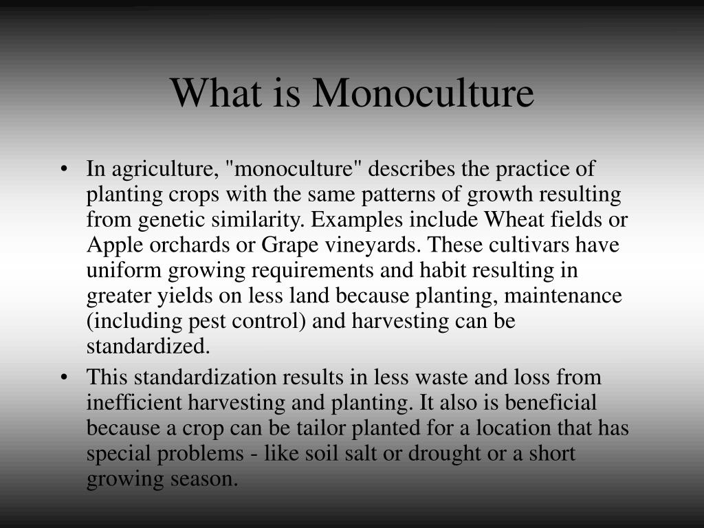 What is Monoculture