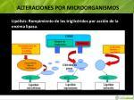 alteraciones por microorganismos4