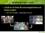 microflora de la leche3