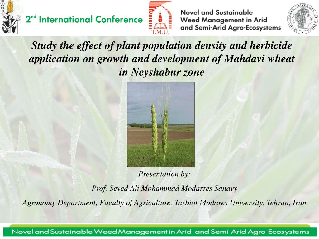 Study the effect of plant population density and herbicide application on growth and development of Mahdavi wheat in Neyshabur zone