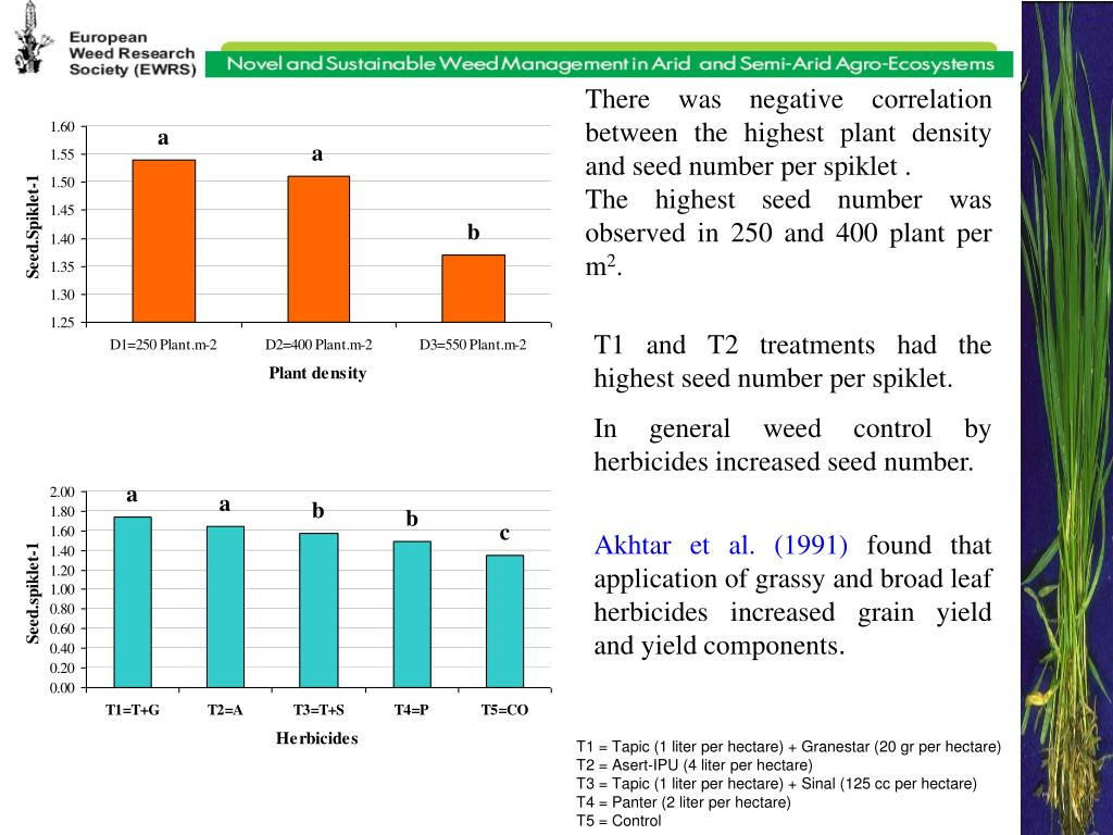 There was negative correlation between the highest plant density and seed number per spiklet .
