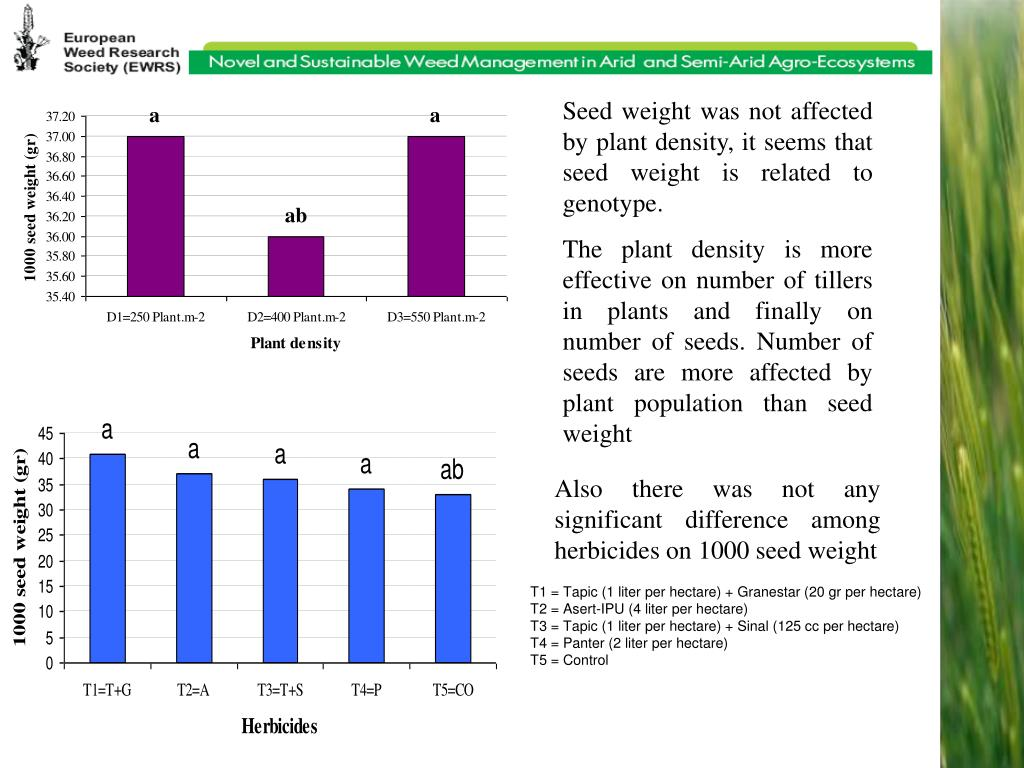 Seed weight was not affected by plant density, it seems that seed weight is related to genotype.