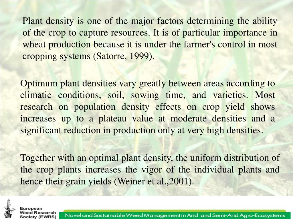 Plant density is one of the major factors determining the ability of the crop to capture resources. It is of particular importance in wheat production because it is under the farmer's control in most cropping systems (Satorre, 1999).