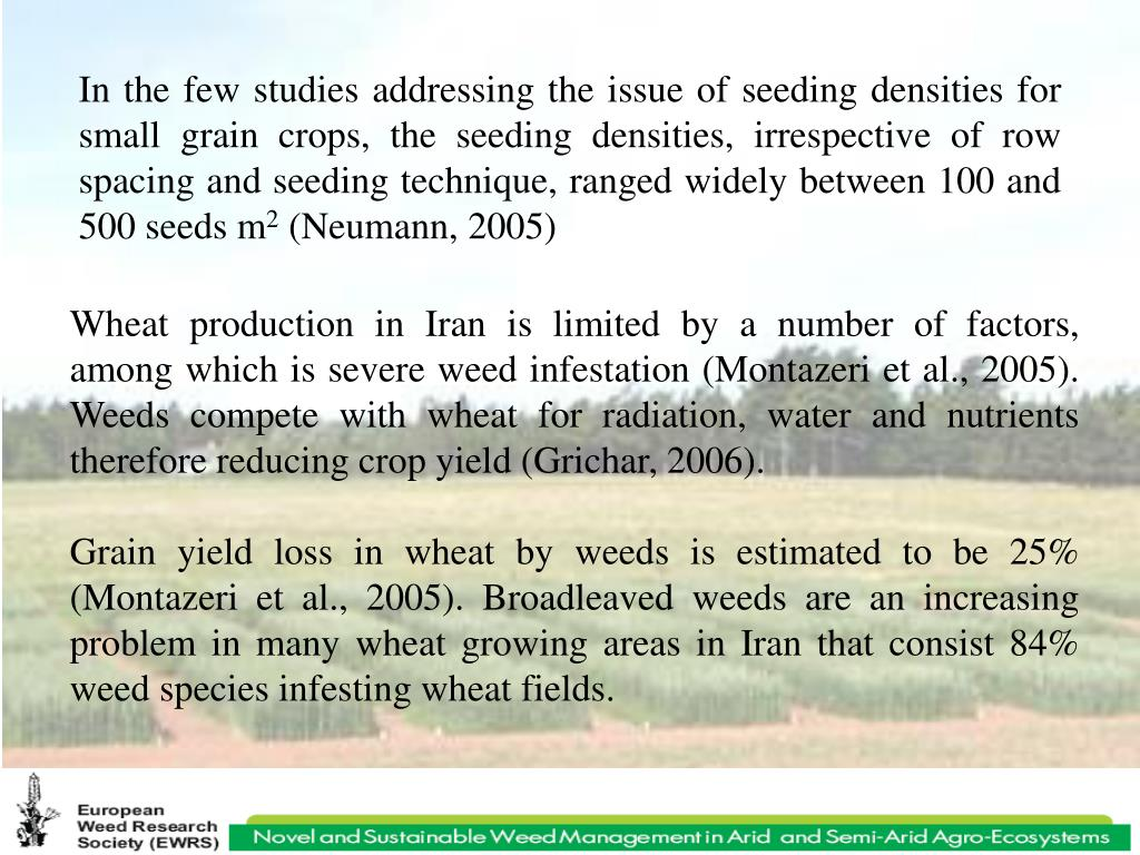 In the few studies addressing the issue of seeding densities for small grain crops, the seeding densities, irrespective of row spacing and seeding technique, ranged widely between 100 and 500 seeds m