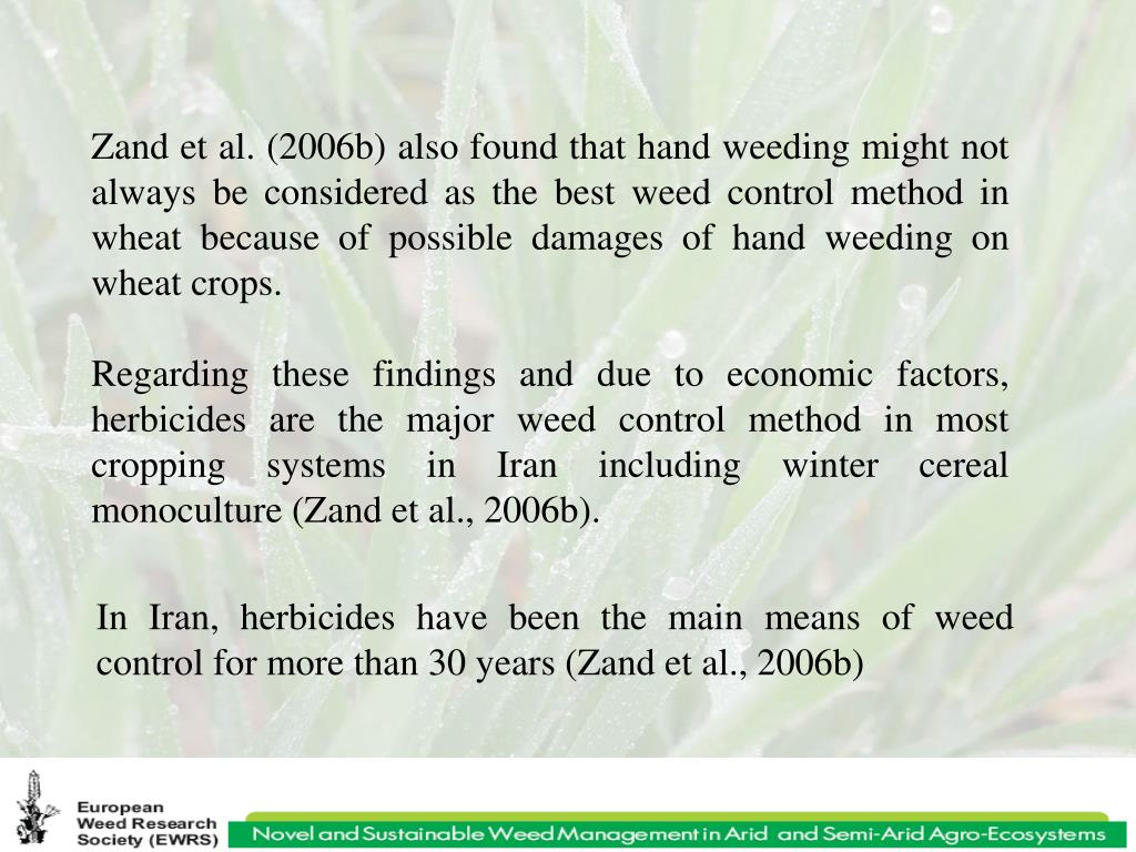 Zand et al. (2006b) also found that hand weeding might not always be considered as the best weed control method in wheat because of possible damages of hand weeding on wheat crops.