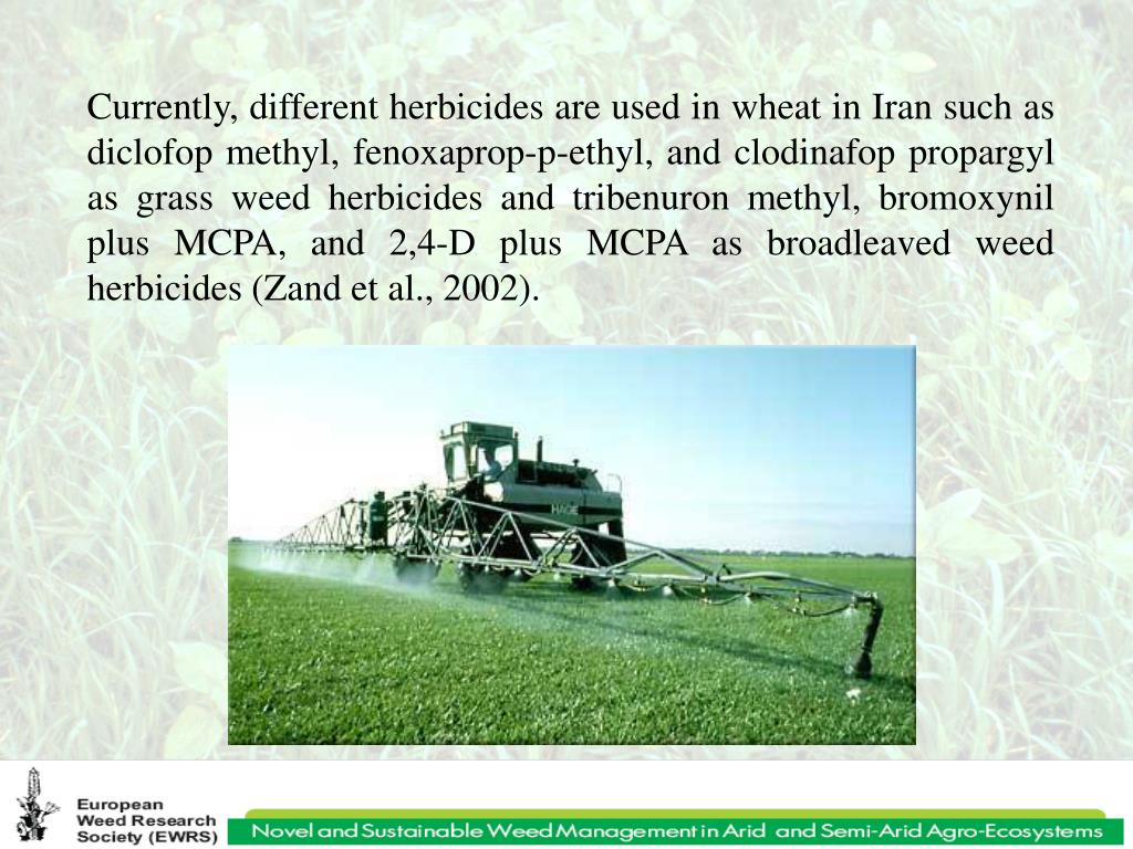 Currently, different herbicides are used in wheat in Iran such as diclofop methyl, fenoxaprop-p-ethyl, and clodinafop propargyl as grass weed herbicides and tribenuron methyl, bromoxynil plus MCPA, and 2,4-D plus MCPA as broadleaved weed herbicides (Zand et al., 2002).