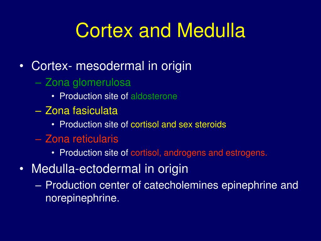 Cortex and Medulla