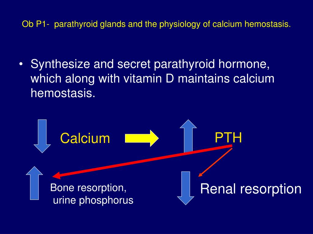 Ob P1-  parathyroid glands and the physiology of calcium hemostasis.