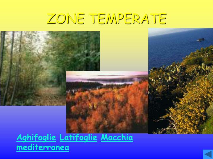 ZONE TEMPERATE