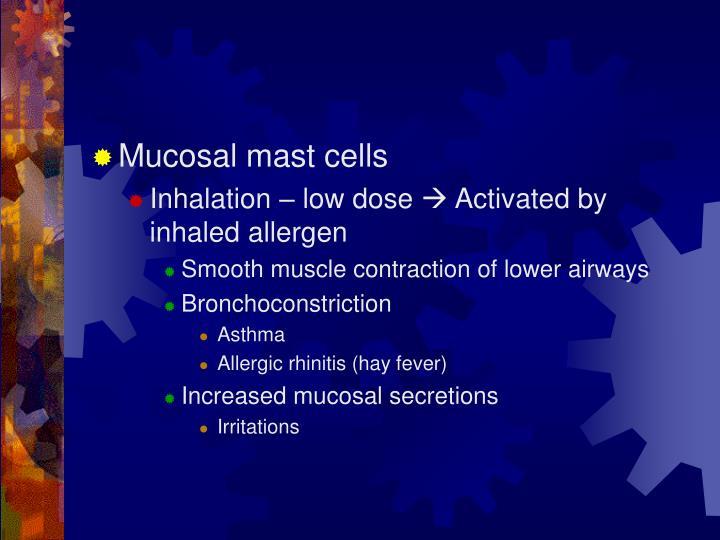 Mucosal mast cells