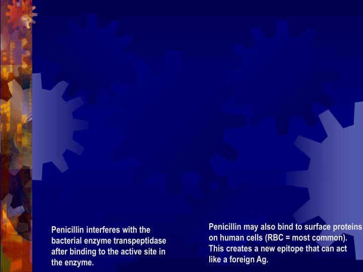 Penicillin may also bind to surface proteins