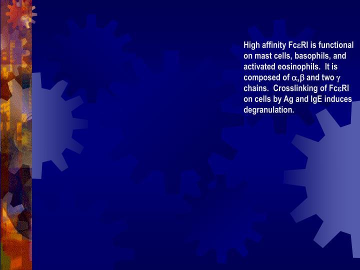 High affinity Fc