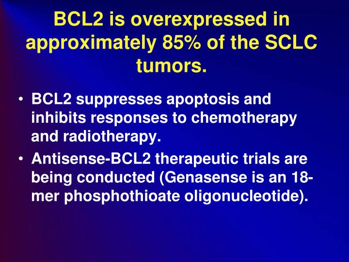 BCL2 is overexpressed in approximately 85% of the SCLC tumors.