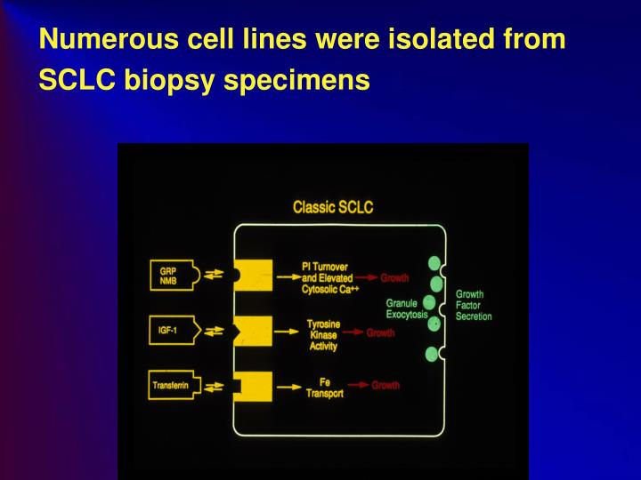Numerous cell lines were isolated from SCLC biopsy specimens