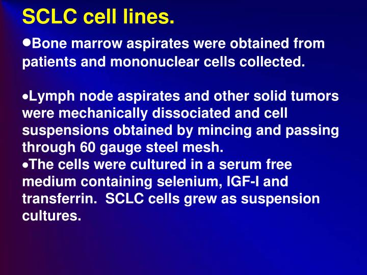 SCLC cell lines.